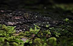 * (PattyK.) Tags: ioannina giannena epirus ipiros greece griechenland hellas ellada spider web rain raindrops whereilive ilovephotography december 2014 lakeside lakefront            winter spidersweb