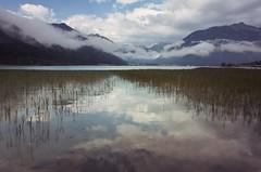 Lake and gras (stefan.bueti) Tags: 2016 achensee maurach tirol
