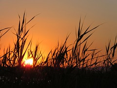 Sunset in Sicily 3 (gdio1170) Tags: sunset sun sky backlight controluce nature naturaleza