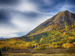 Fall foliage (uptownguydenver) Tags: aspentrees captureone coloradoaspentreesatcrestedbutte crestedbutte hdr iq350 phaseonexf populustremuloides washingtonculch deciduoustree fall fallfoliage quakingaspen tremblingaspen yellowleaves co usa weather projectweather