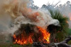 K52S5840cs (Ben D'Acunto) Tags: burnoff bushfires pentax pentaxk5iis