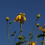 oneplant, ouryard, jdy199 XX201607179172.jpg thumbnail