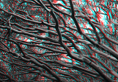 Sydney, Australia (DDDavid Hazan) Tags: sydney nsw australia anaglyph 3d bw blackandwhite bwanaglyph 3danglyph 3dstereophotography redcyan redcyan3d stereophotography stereo3d royalbotanicalgardens tree nature sydneyharbour