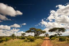 Lost (Jose Antonio Pascoalinho) Tags: africa tanzania tarangire savannah baobab acacia landscape scenic scenario clouds trees dirttrack wilderness world nature outdoor weather travelphotography safariphotography safari zedith sky