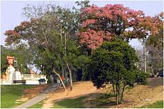 Quinta da Boa Vista (o.dirce) Tags: quintadaboavista riodejaneiro brasil socristvo cidademaravilhosa odirce natureza vegetao