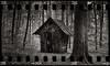 Gingerbread House (*altglas*) Tags: mediumformat mittelformat film analog expired expiredfilm fujineopan1600 bw monochrome zeiss superikonta 53316 tessar wood old alt hexenhaus witch witchshouse forest wald waldkunst waldkunstpfad kleinbildfilm 135 35mmfilm