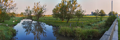 Bucolic bliss at Cox Creek (virgil martin) Tags: panorama goldenhour landscape cattle reflection farm ontario canada olympusomdem5 oloneo microsoftice gimp wellingtoncounty