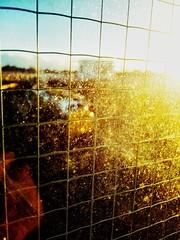 Dreaming (sjpowermac) Tags: deltic 55018 ballymoss york railway station sunset whitecab finsburypark dream toughenedglass glass wire dust grid cartesian 55022 golden honeycomb