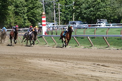 Horses at Saratoga (ndoomont) Tags: horse nyra race track
