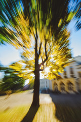 Autumn in motion #292/365 (A. Aleksandraviius) Tags: kaunas lietuva fall autumn motion leves yellow green sky sun sunrise morning zoom lithuania europe nikoneurope nikon 1424mm 1424 nikkor 365days d810 nikond810 365 project365 292365 3652016