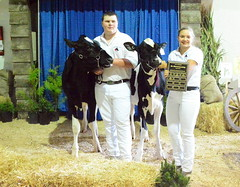 Interior Provincial Exhibitition - IPE (james.watt44) Tags: armstrongbc dairycows dairycattle 4h shuswapdairy4h ipe interiorprovincialexhibition interiorprovincialexhbitionrodeo calves calf cows cow dairy