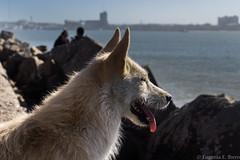 Mirando al mar (Euge Ibero) Tags: dog perro mar mardelplata sea animal photography pics canon