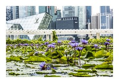 Lillies and Louis (red stilletto) Tags: singapore marinabay marinabaysands artsceincemuseum artsceincemuseumsingapore waterlillies louisvuitton louisvuittonmarinabay louisvuittonmarinabaysands