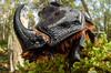 DIY – Macro fisheye (johnhallmen) Tags: insect macro diy wideanglemacro fisheye canon760d canon2428 cctv canon270ex