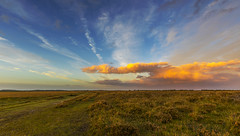 Squall (nicklucas2) Tags: newforest nature landscape grass sunset milkham cloud
