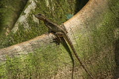 20160130-5C4A0346 (Take-it-easy59) Tags: 2016 30012016 corcovado corcovadoparquenacional costarica npcorcovado nature naturephotography tropicalrainforest tropischregenwoud winter