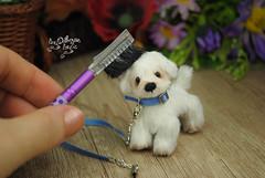 rex05 (Zhanna Zolotina) Tags: miniature dog ooak handmade toyzz tinydolhousetoyzz altair teddy bear dollhouse puppenhaus blythe