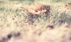 Occhi trasparenti... (Cammino & Vivo Capovolto  Claudio ) Tags: claudio bokeh canon 50mm f20 natura nature danbo pensieriinvisibili foglia foglie autunno leaf autumn colori colors luce ligth