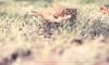 Occhi trasparenti... (Cammino & Vivo Capovolto ☆ Claudio ☆) Tags: claudio bokeh canon 50mm f20 natura nature danbo pensieriinvisibili foglia foglie autunno leaf autumn colori colors luce ligth