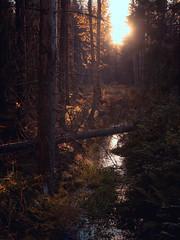 Paistaa se aurinko risukasaankin (trm42) Tags: nationalpark autumn teisko syksy kansallispuisto fall suomi finland
