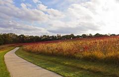 Sea of Red (Tiara Rae Photography) Tags: sea red bauermeister prairie autumn fall colors scarlet crimson nebraska omaha zorinsky lake path