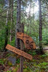 DSCF4267 (LEo Spizzirri) Tags: bevin morgan peter odin huck huckleberry shug cabin northwest seattle forest pacific mushroom moss josh betsy ladder green thick