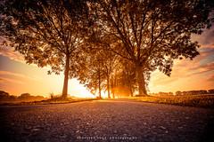 ...der sonne entgegen (fotos_by_toddi) Tags: fotosbytoddi voerde niederrhein nrw nordrhein westfalen wolken sony sonya7 sun sky bume baum tree herbst herbstlich
