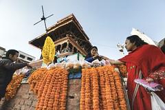 marigold (Mark Panszky) Tags: nepal kathmandu vendor marigold seller durbarsquare