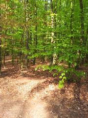 20130505_171819 (MelisaTG) Tags: cameraphone trees woods urbanwoods greenleafs