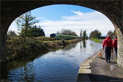 Under Pike Bridge (bbusschots) Tags: bridge ireland dog animal train walking canal rail maynooth pathway irishrail kildare dmu topazadjust classie29000
