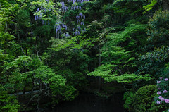Honen-in, Kyoto /  (Kaoru Honda) Tags: city morning summer green japan landscape temple japanese nikon kyoto traditional earlymorning     earlysummer higashiyama freshgreen   honenin         d7000