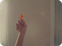 RENASCER A FLOR (Eline Cristine) Tags: light portrait orange selfportrait flores flower texture textura love luz brasil female self hands focus soft flickr hand text mulher laranja flor dia days poesia 365 fotografia tones mos tarde sozinha feminina delicadeza delicada 2013 gex5 brasilemimagens lainecristine