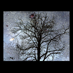 Reflets-2013-10 (Coquelet) Tags: trees reflections pages arbre reflets formes flaques photosperso