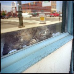 (Ansel Olson) Tags: street light sun 120 6x6 mamiya tlr film window cat mediumformat virginia kodak richmond sidewalk va shade blinds 100 rva ektar c330 louvered c330s mamiyasekor55mmf45