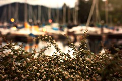 Gibsons Marina (dora_explorer) Tags: project boats harbour 365 masts littlepinkywhiteflowerbush