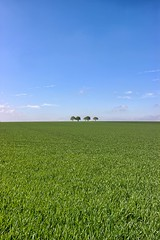 Lonely trees sat (NicVW) Tags: blue sky tree field clouds belgium empty meadow void liege wanze braives hesbay