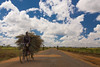 Mozambique (danieleb80) Tags: africa road people mozambique ibo pangane