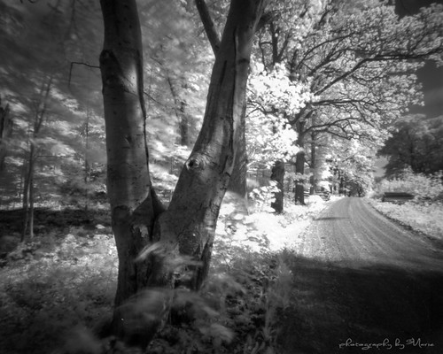 Spring beeches in IR