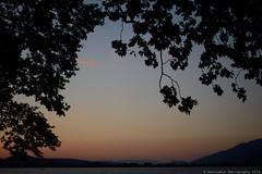 Tree leaves over Ioannina lake (Rentoumis Phoography) Tags: leaves sunset ioannina