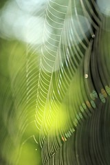 Silky threads... (ykaren89) Tags: spider web silky nature dew bokeh canon abstract morning woods natural close macro green white
