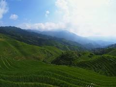 Summer rice fields (claying) Tags: olympus em5 panasonic china guangxi guilin longsheng longji dragonsback rice terrace lumixgfisheye8mmf35