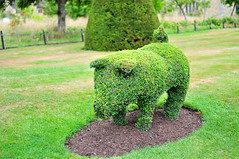 DSC_8187 (Thomas Cogley) Tags: hever castle kent garden nature natural plant topiary pig boar thomas cogley thomascogley