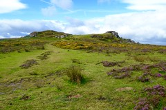 Saddle Tor (heathernewman) Tags: saddletor tor dartmoor nationalpark dartmoornationalpark heather gorse yellow purple walk countryside view landscape outdoor recreation rural widecombeinthemoor