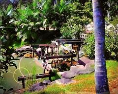 http://www.tbnsa.gov.my/en/home2 #travel #holiday #outdoor #green #Asia #trip #garden #Malaysia #selangor #shahalam #bukitcahaya # # # # # # # # (soonlung81) Tags: travel holiday outdoor green asia trip garden malaysia selangor shahalam bukitcahaya