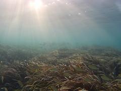 Cabo de Palos, under water (Sonia.Solano) Tags: underwater bajoelagua buceo snorkel snorkeling cabodepalos murcia mar mediterrneo