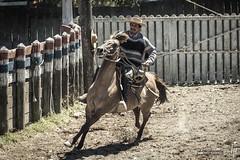 Rodeo chileno: Un huaso (hapePHOTOGRAPHIX) Tags: 152chl amricadelsur chile chileanrodeo cowboy fognlosalerces huaso lamedialuna loslagos nikond750 pferd rodeochileno southamerica sdamerika tier animal chilenischerlandarbeiter equestrian equine hapephotographix horse horses rodeocorral puertomontt xregin cl