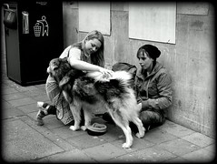 Begging (* RICHARD M (Over 5 million views)) Tags: street candid beggar begging beggars dogs canine canines mono blackwhite litterbin mouthstofeed emptybellies cynical cynicism assets liabilities asset liability oxymoron contradictioninterms incongruous incongruity downandout suspicious bath cityofbath somerset pavements vagrant vagrancy husky pets animals