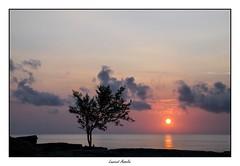 Aube (Laurent Asselin) Tags: aube sunrise soleil sun arbre ciel tree paysage couleurs mer eau ocan