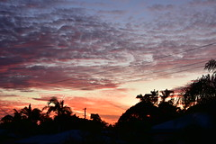 Straight Out Of The Camera [11] (Images by Jeff - from the sea) Tags: nikon d7200 dusk trees twilight tamron tamronsp2470mmf28divcusd pink palmtrees pinksunset orangesunset redsunset clouds bluesky red powerlines powerpoles mangotree bundaberg queensland australia 2016 2470mm july sunset 500v20f topf25