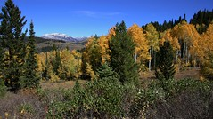 Fall Colors (The VIKINGS are Coming!) Tags: wyoming tetons bridgermountains wilderness fallcolor autumn aspens yellow quakeys deer bears mountainlion bare coldnights